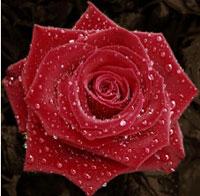 Trauercafe Lebensblüte